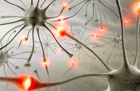 Neuronii si sinapsele